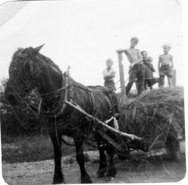 Gilbert and P'tit with a young work crew hauling hay.
