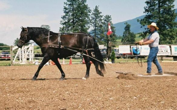 Gilbert and his Canadian mare competing in the stoneboat pull at O'Keefe Ranch.